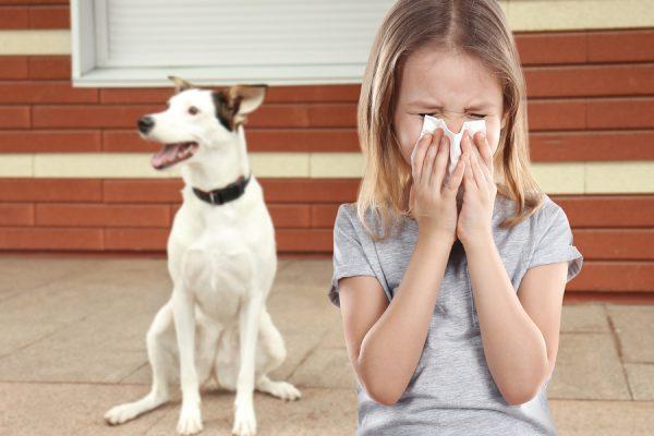 allergy-friendly dog