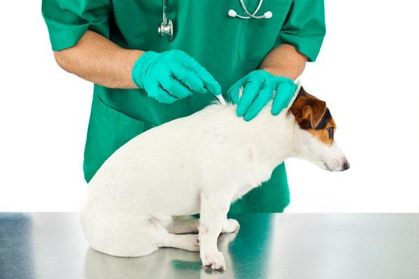 flea treatments