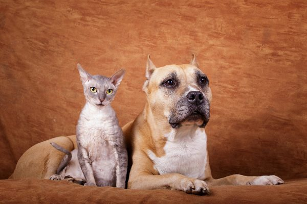 senior pets: cat and dog