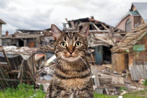 cat, destructive separation anxiety