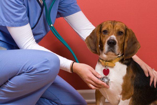 annual vet visit