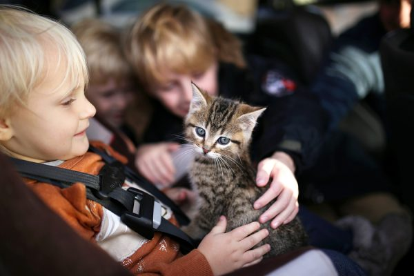 kids in a car with newly adopted kitten; preparing for your new pet