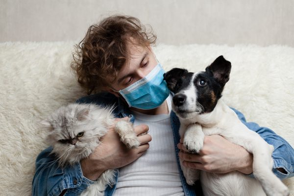 A Man with Face Mask Considering Adopting Pets Is Sitting On A Sofa With A Dog and Cat. Quarantine Coronavirus Pandemic