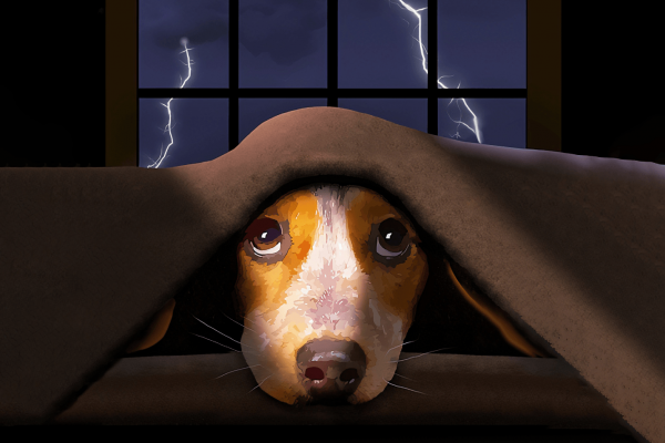 A cute little beagle dog hides from scary thunder