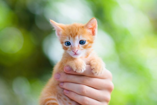 Child holding baby cat. Tips to help you choose a kitten that's right for your home and situation