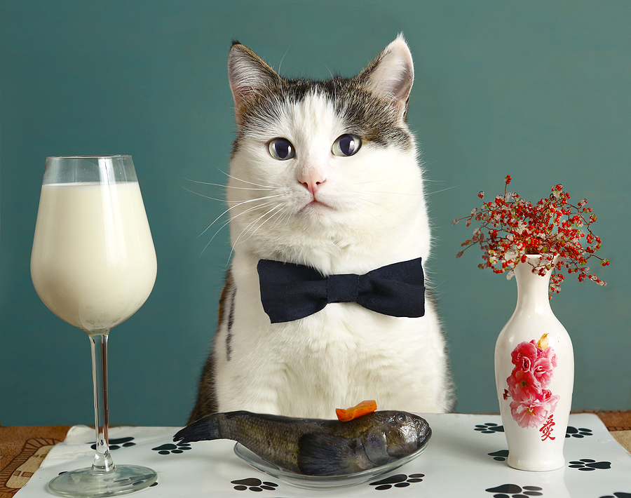cat with milk in wine glass and plate of raw fish, dressed fancy with bow-tie for fancy dinner; dairy products and cats