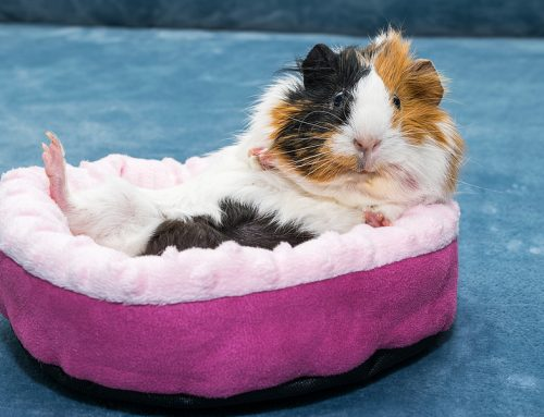 Top Low Maintenance Pets to Own