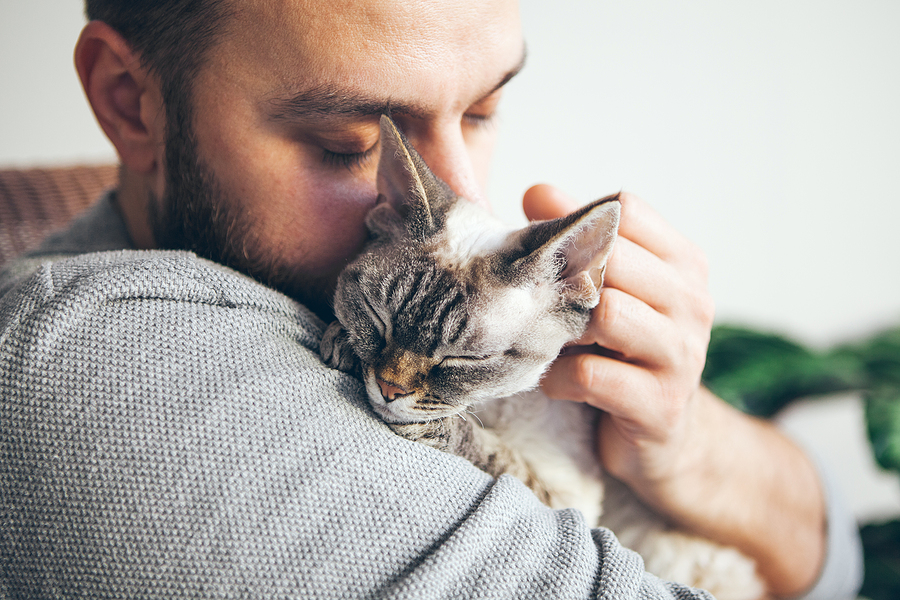 portrait of happy cat with closed eyes and young bearded man. Young man is cuddling his cute Devon Rex Kitten.