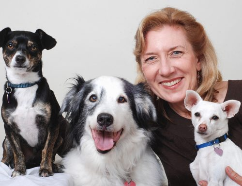 Best Dogs for Multi-Pet Homes
