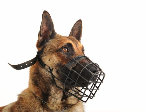 Does My Dog Need a Muzzle?